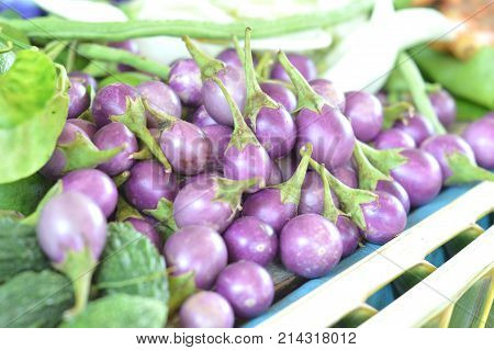 Thai purple eggplant concept for vegetables with medicinal properties.Such as expectorate Relieve Fever Parasitic worms Sexual stimulation.Picture for Pharmaceutical Organization clinic herbal website.