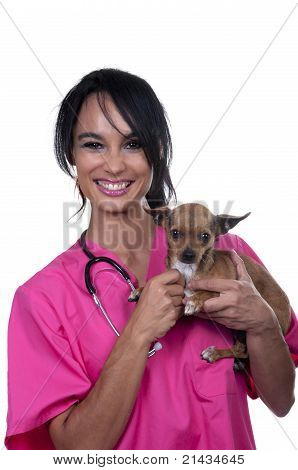 Veterinary Girl With Chihuahua Dog