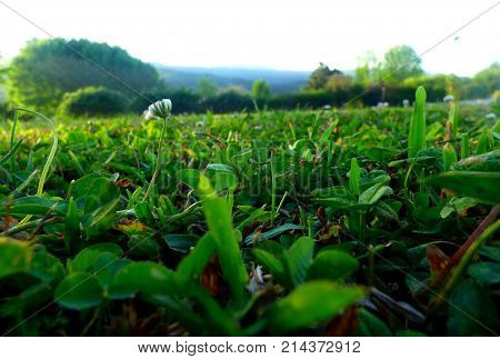 Generic vegetation. Foreground of grass. Foreground of lawn