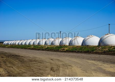 Row of white plastic houses in the form of a ball, Growing of young dairy calves in the nursery with white calf houses or calf-boxes in diary farm