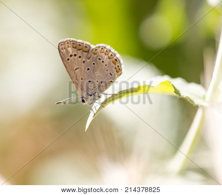 beautiful butterfly in nature . In the park in nature