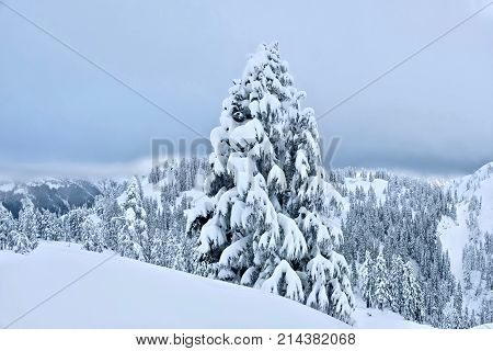 White Christmas. Mount Baker ski resort after snowfall. Bellingham. Washinton. United States.