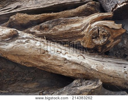 Firewood felled logs of dry trees with snags of brown color lie piled in a heap.