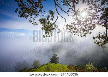 Misty mountain summer landscape with pine tree branch. Early foggy morning in Main Caucasian ridge, Zemo Svaneti, Georgia. Green hills with mountain snowy peaks in the background. Holidays and travel