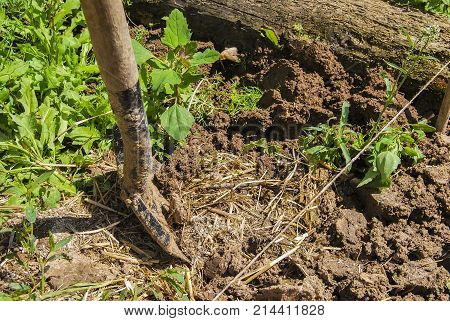 The process of digging the ground with a shovel in the garden before planting the potatoes