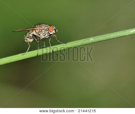 Fly On A Stem