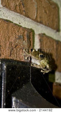 Frog On Metal Box Head On