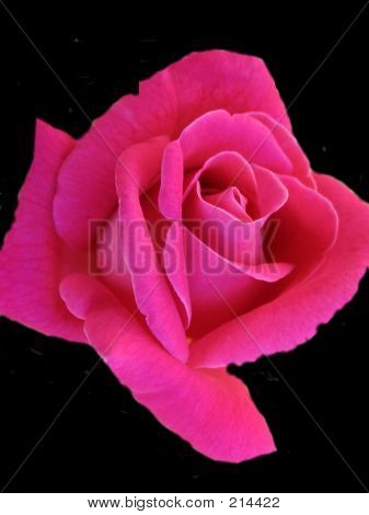 Pink As A Rose