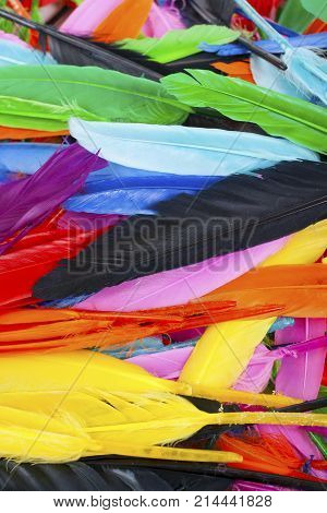 Beautiful rainbow color colored bird feathers. Parrot colors goose duck colorful painted feathers. Feather texture background or wallpaper for any concept. Studio photo background.
