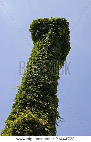 An ivy-covered pillar