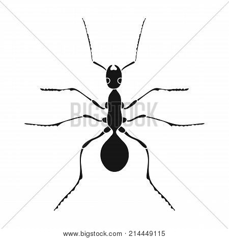 Insect ant single icon in black style for design.Pest Control Service vector symbol stock illustration .