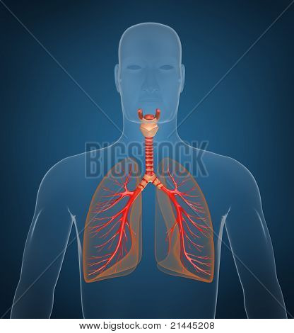 Respiratory system. On blue background
