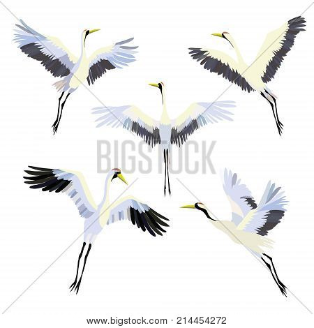 Vector watercolor set of illustrations bird crane. White stork . isolated object, crane, bird, vector, stork, design, graphic, drawing, isolated, heron animal art drawn nature set white watercolor egret