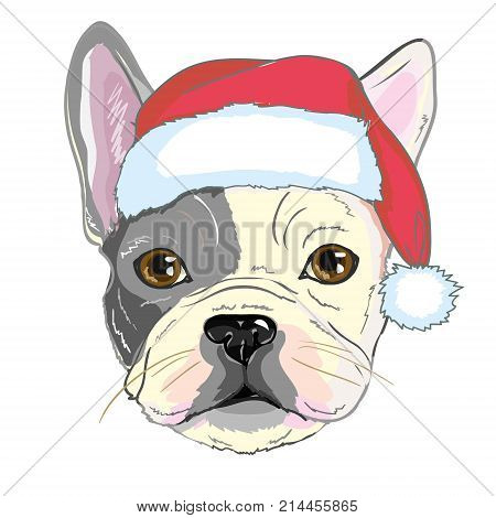 b2967dd7e76 Christmas greeting card. Pug dog with red Santa s hat.
