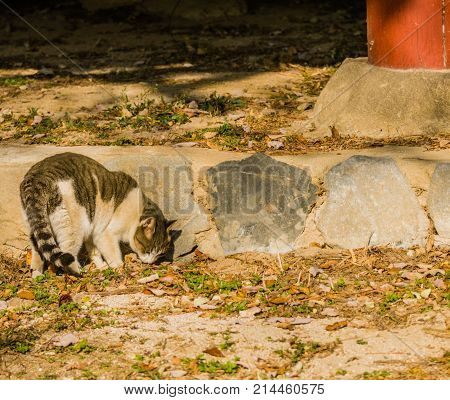 Gray And White Tabby Cat  On A Sunny Afternoon