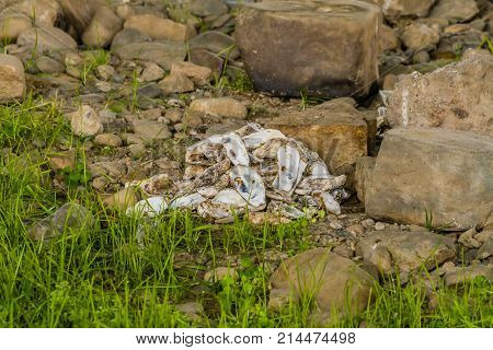 Pile Of Discarded Oyster Shells