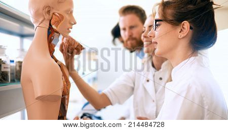 Young students of medicine examining together anatomical model in classroom