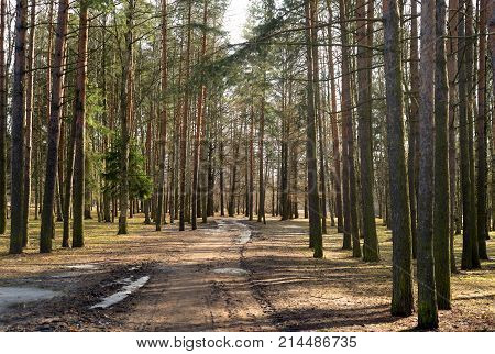 Early spring park at sunny day Russia.