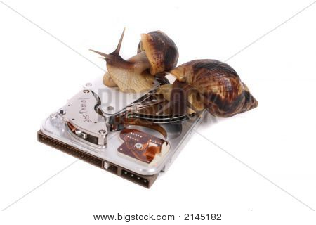 Snails And Data
