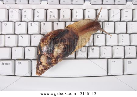 Snail And Keyboard