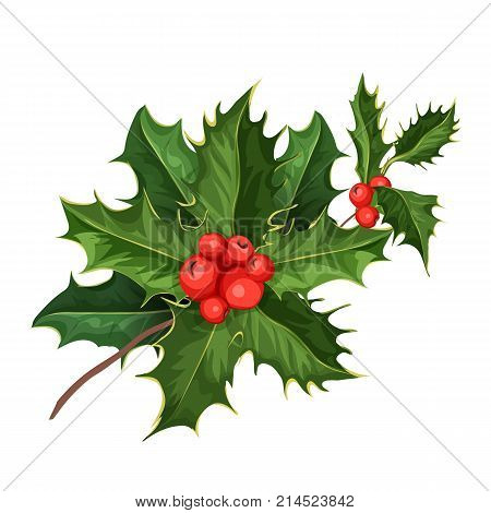 vector realistic hand drawn holly, ilex with berry and leaves, mistletoe branch, twig. Christmas, new year holiday celebration symbol. Isolated illustration on a white background.