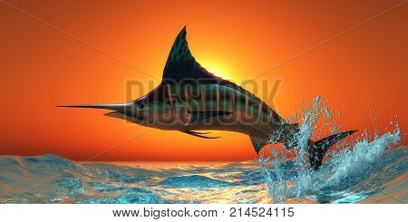 Atlantic Blue Marlin 3d illustration - An Atlantic Blue Marlin jumps out of the blue ocean in a spectacular leap at sunset.