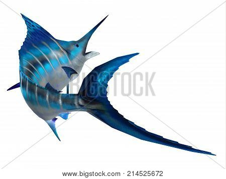 Marlin Fish Tail 3d illustration - The Atlantic Blue Marlin fish is the largest bony fish and is a popular game fish in the Atlantic ocean.