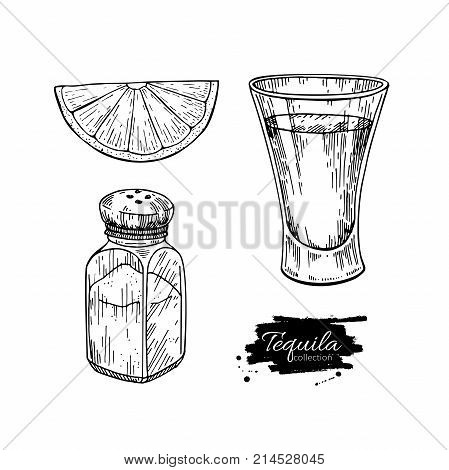 Tequila shot glass with lime and salt shaker. Mexican alcohol drink vector drawing. Sketch of shot glass cocktail with citrus fruit slice. Engraved illustration for label, icon, bar or restaurant menu.