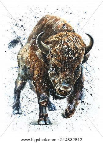 Buffalo watercolor animals painting bison