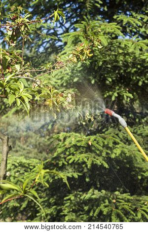 Spraying a sick fruit tree. The mist emerges from the spray lance. Spraying a sick peach fruit tree.