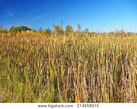 Cattail marsh at Lake LaGrange in the Kettle Moraine State Forest of Wisconsin