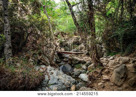A Small Bridge Crossing Over A Stream On A Hiking Trek To Caledonia Waterfall Near Platres, Cyprus