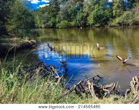 Birds In The Pond At Audubon Park In Louisiana