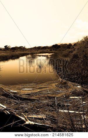 Flotsam in the malibu lagoon - off pch in Los Angeles