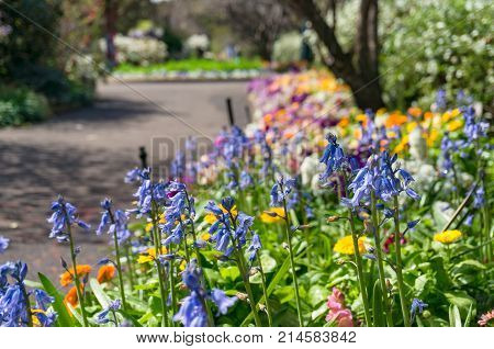 Colourful Flowerbed On Sunny Day