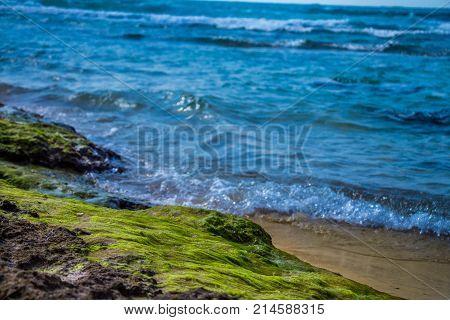 Green algae on a rock on coastline of the blue sea.