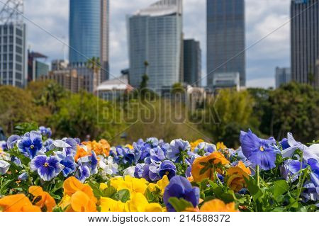 Colourful Spring Flowers With Modern Cityscape On The Background