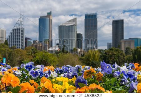 Colourful Spring Flowers With Sydney Cityscape On The Background