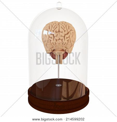 Human brain in a glass container jar on white background. 3D render