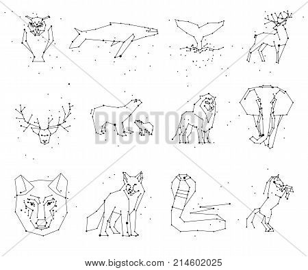 Collection of animals constellation isolated on white background. Wild animals with line and stars, horoscope style. Constellation animals for cards, elephant, owl, wolf and other animals