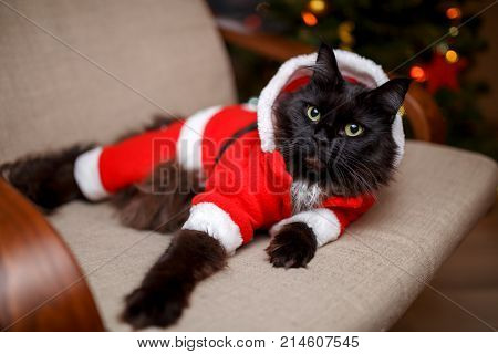 Image of festive cat in Santa costume sitting at chair against background of Christmas tree with burning garland