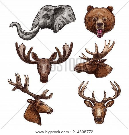 African animal and forest mammal isolated vector set. Elephant, deer, bear, elk, antelope, moose, reindeer and grizzly animal muzzle sketch for zoo, safari trip symbol or hunting sport design