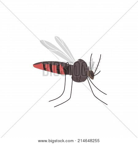 Anopheles mosquito, dangerous carrier, transmitter of zika, dengue, chikungunya, malaria and other infections, cartoon vector illustration isolated on white background. Zika transmitting mosquito