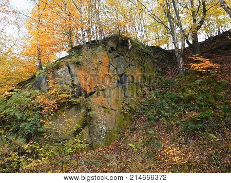 gritstone outcrop in pennine valley autumn forest in crownest woods near hebden bridge in calderdale west yorkshire