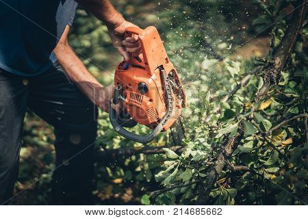 Lumberjack Male Worker Cutting Firewood In Forest With A Professional Chainsaw.
