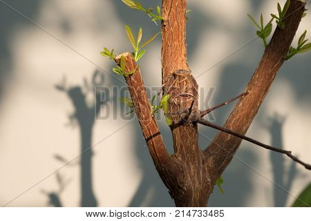 Tree branch with bud embryonic green leave shoot. gray abstract background.