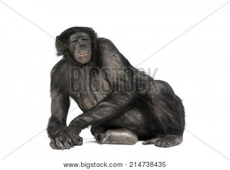 Front view of a monkey lying down