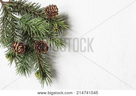 Evergreen bough with pine cones on textured white wood background