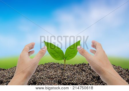 Hand Of Man Growing And Nurturing Tree Growing On Fertile Soil With Nature Background, Care Environm