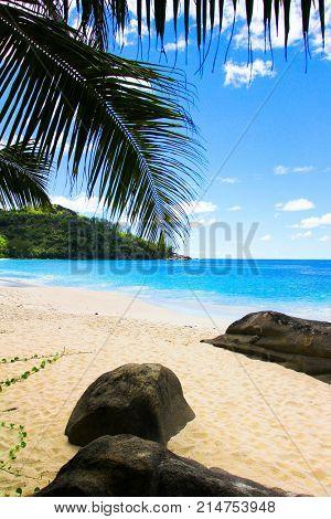 Getaway Tree Sea